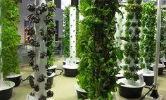 Jardín vertical con verduras en el aeropuerto de Chicago