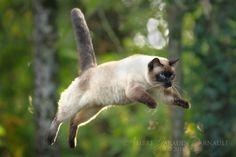 You Can Fly ! You Can Fly ! You Can Fly ! by darkcalypso.deviantart.com on @DeviantArt