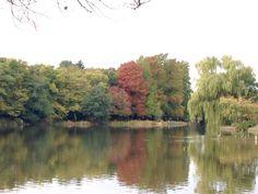 #石神井公園 すこし、#紅葉 しはじめました。