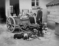 This astounding photo from the 1880's captures a team of dogs that helped their family move their milk cart throughout the village. Many early milk carts were family affairs and they sold other goods as well.