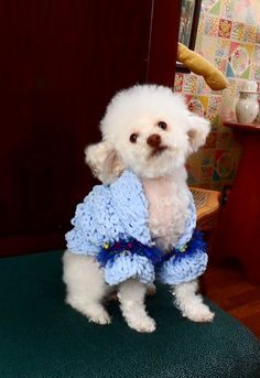 Blue BellDog Shrug jacket sweater baby blue by CanineCoutureLTD,