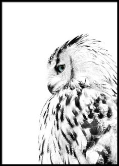 White owl, posters in the group Posters / Formats / at Desenio AB Elephant Poster, Lion Poster, Poster Poster, Poster Bonito, Desenio Posters, Gold Poster, Poster Store, Owl Photos, Photos Of Animals