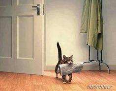 Paper cat