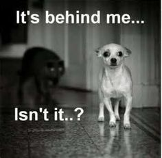 It's behind me... Isn't it..? -Image detail for -funny dog and cat pictures