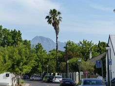 Blick in die Umgebung Safari, Garden Route, Seattle Skyline, Street View, Travel, Cape Town, Environment, Travel Advice, Destinations