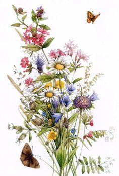 Nature Illustration, Watercolor Illustration, Botanical Drawings, Botanical Prints, Watercolor Flowers, Watercolor Art, Fuchs Tattoo, Wildflower Tattoo, Marjolein Bastin