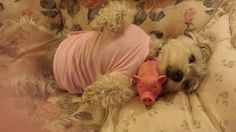 Daisy and her pink piggy