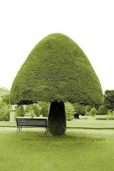 Save Our Green » Fungi Hedge Topiary