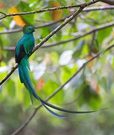 Resplendent Quetzal Savegre Natural Reserve, Costa Rica - photo by Max Waugh, via Costa Rica Photo Tours