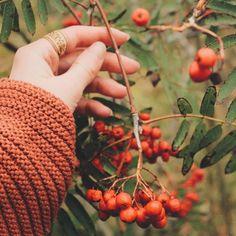 I wаnt to memorize these bright colors of autumn    Сохранить бы в памяти эти яркие краски...