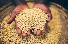How open data on agriculture & nutrition can solve world hunger