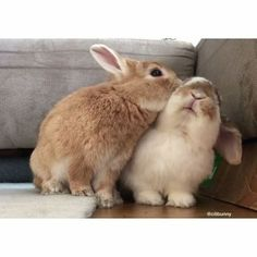 22 Heartwarming Pictures of Animals and Their BFFs Cute Funny Animals, Cute Baby Animals, Funny Cute, Animals And Pets, Funny Pics, Cute Baby Bunnies, Pet Rabbit, Guinea Pigs, Animals Beautiful