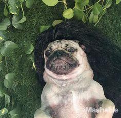 Doug the Pug is living the fabulous life of a Kardashian.