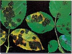 mavri-kylida Weed Killer, Plant Leaves, Plants, Gardening, Lawn And Garden, Plant, Planets, Horticulture