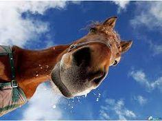 horse face - Google Search