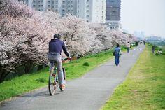 多摩川サイクリングコース(鵜の木付近)