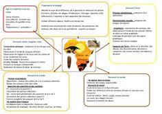 organigramme Afrique