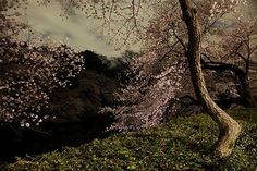 Ori Gersht, Chasing Good Fortune: Tokyo Imperial Memories, After Dark