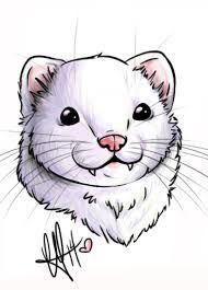 「ferret drawing」の画像検索結果