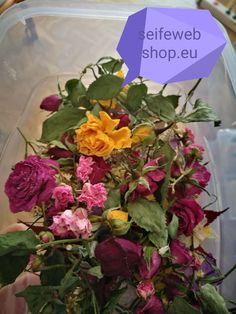 Plants, Shopping, Plant, Planets