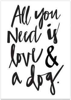 necesidad amor