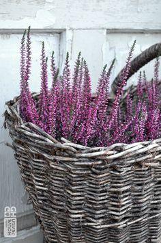 wrzosy w koszyku Wicker Baskets, Plants, House, Home Decor, Decoration Home, Room Decor, Haus, Plant, Interior Design
