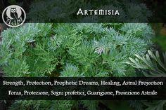 Magical Uses of Artemisia: Strength, Protection, Prophetic Dreams, Healing, Astral Projection \ Usi Magici dell'Artemisia: Forza,  Protezione, Sogni profetici, Guarigione, Proiezione Astrale || L'antro della magia http://antrodellamagia.forumfree.it/?t=56646307