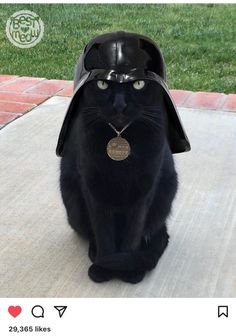 I find your lack of treats disturbing - LOLcats is the best place to find and submit funny cat memes and other silly cat materials to share with the world. We find the funny cats that make you… Baby Animals, Funny Animals, Cute Animals, Animals Images, Crazy Cat Lady, Crazy Cats, I Love Cats, Cool Cats, Cute Dogs And Cats