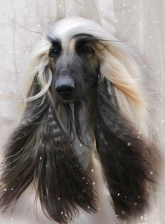 best images, photos and pictures ideas about afghan hound dog - oldest dog breeds Hound Breeds, Hound Dog, Dog Breeds, Beautiful Dogs, Animals Beautiful, Cute Animals, Dogs And Kids, Dogs And Puppies, Doggies