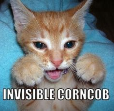 17 Of The Best Invisible Cat Pictures (shared via SlingPic)