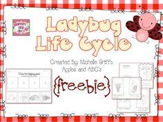 Life Cycle of a Ladybug FREEBIE!