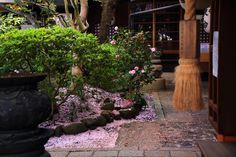 Kyoto Uhoin-Temple scattered cherry blossoms
