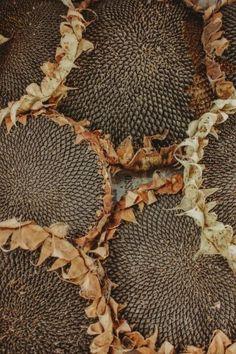 Happy Thanksgiving Canada, Ivy House, Lovely Smile, Long Shadow, Autumn Trees, Fall Harvest, Halloween, Burlap Wreath, Tumblr