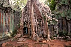 ... Ta Prohm, an overgrown palace near the temple of Angkor, Cambodia.  by Stefan Heinrich (flickr)