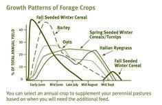Growth Patterns of cover Crops Forage Crops, Gardening Tips, Seeds, Patterns, Cover, Block Prints, Blankets, Grains, Pattern