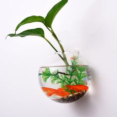 single bubble terrarium// wall hanging planters// wall bubble fishbowl//glass wall vase for house decor