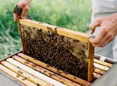 I will one day be a beekeeper.