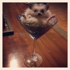 EVERYONE pines for dry martinis, right? | 25 Hedgehogs Trying To Escape Their Identity