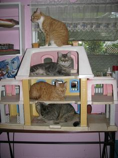 I Love Cats, Cool Cats, Funny Animals, Cute Animals, Cat Carrier, Cat Memes, Cat Lady, Cats And Kittens, Dog Cat