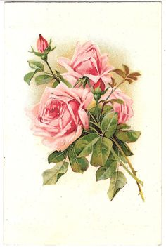 A spray of pink Roses