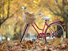 Bicicleta da rua, outono, folhas Papéis de Parede - 1024x768