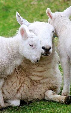Loving Mama  #animals #babyanimals