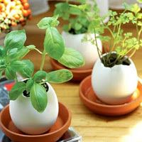Use eggshells to start seedlings