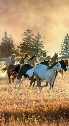Horses only for the Horse Lover. All The Pretty Horses, Beautiful Horses, Animals Beautiful, Cute Animals, Pretty Animals, Beautiful Scenery, Especie Animal, Mundo Animal, Horse Photos