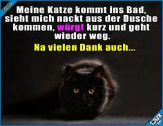Damit ist dann wohl alles gesagt x.x #Katzen #Katzenliebe #foreveralone #allein #lustig #Sprüche #lustigeBilder #Statusbilder