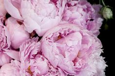 Peonies Photography Download Gift for Her by LydiaVideiraLight
