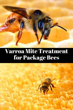 Oxalic acid is an effective method for treating package bees for varroa mites when the hive is in a broodless state. Bee Mites, Package Bees, Pollution Prevention, Oxalic Acid, Beekeeping, Permaculture, Honey, Packaging, Strong