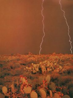 Oh Mother Nature Thank you 🍂 Desert Aesthetic, Orange Aesthetic, Aesthetic Objects, Fallout New Vegas, Photo Wall Collage, Picture Wall, New Mexico, Western Wall, Westerns
