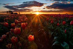 sunset #Sunset #Summer #Sun