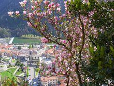 Varallo , Piedmont, ITALY : Magnolia